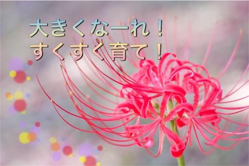 f:id:mikumama:20160131085411j:image