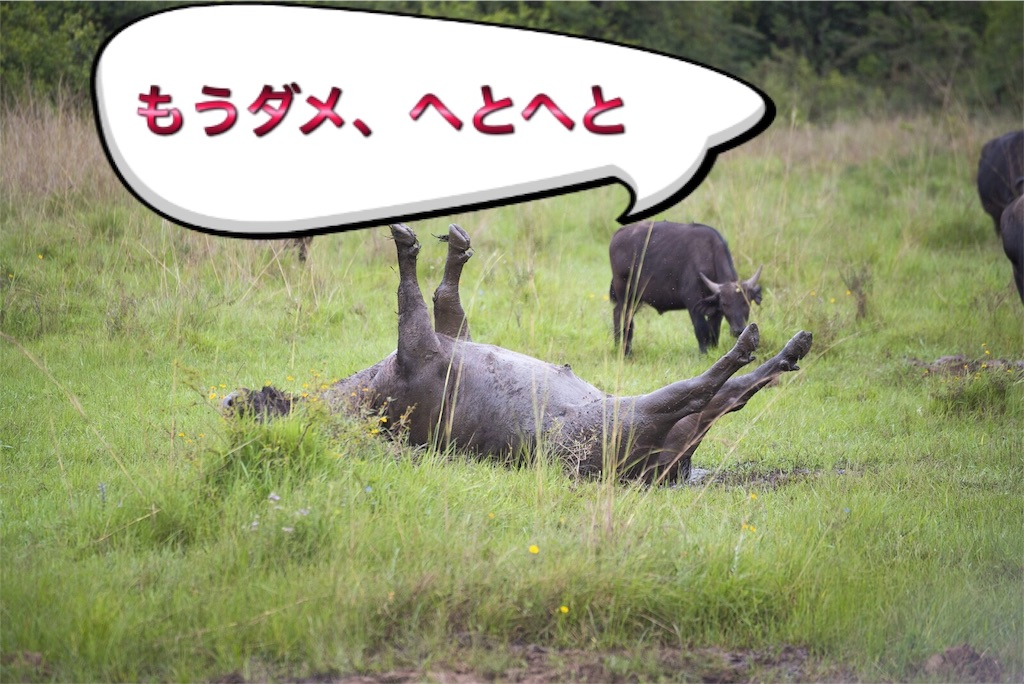 f:id:mikumama:20160703000637j:image
