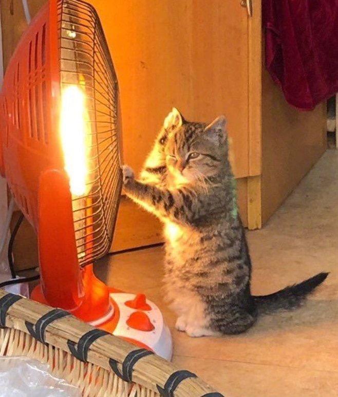 癒しの猫画像