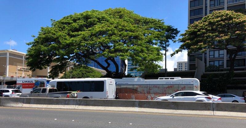 ハワイのANAエクスプレスバス サンセットオレンジの車体