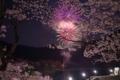 京都新聞写真コンテスト 桜と花火
