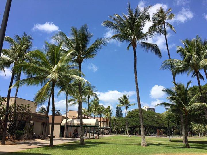マリオットコオリナビーチクラブのヤシの木。ハワイに着いたと感じさせてくれる風景ですね。