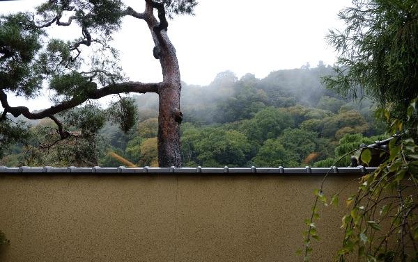 翠嵐の「京月琴」の専用庭から見た嵐山