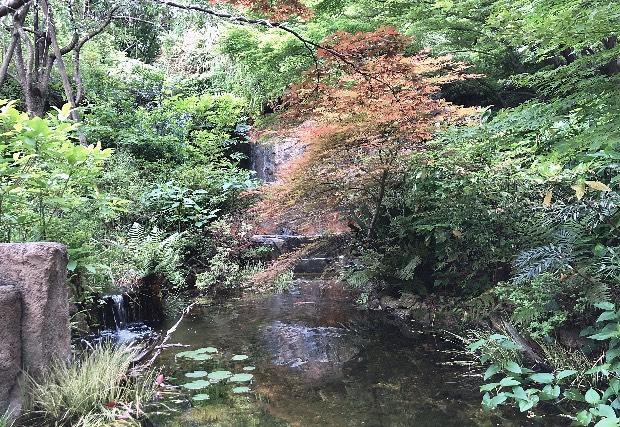 ザ・ウェスティン・ガーデンの池