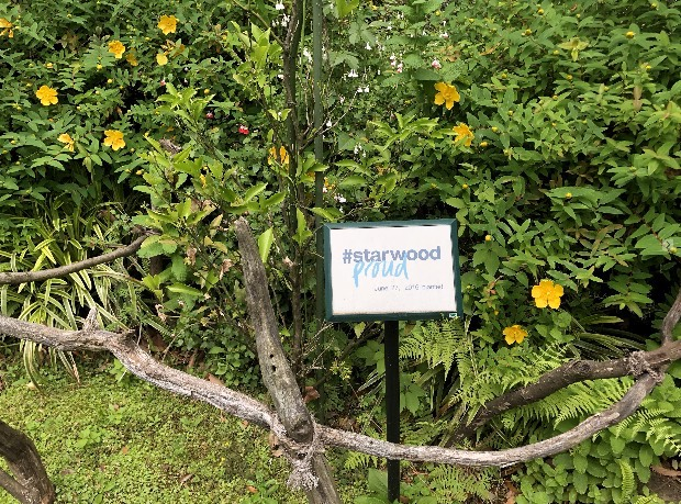 Starwood Proudの苗木
