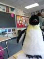 el pingüino en la clase de Español