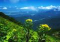 京都新聞写真コンテスト 「雲上の尾根に咲く」