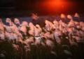 京都新聞写真コンテスト「金穂に染まる刻」