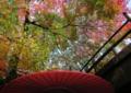 京都新聞写真コンテスト「降り注ぐ紅葉銀河」