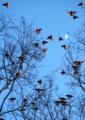 京都新聞写真コンテスト 黄昏の天空へ