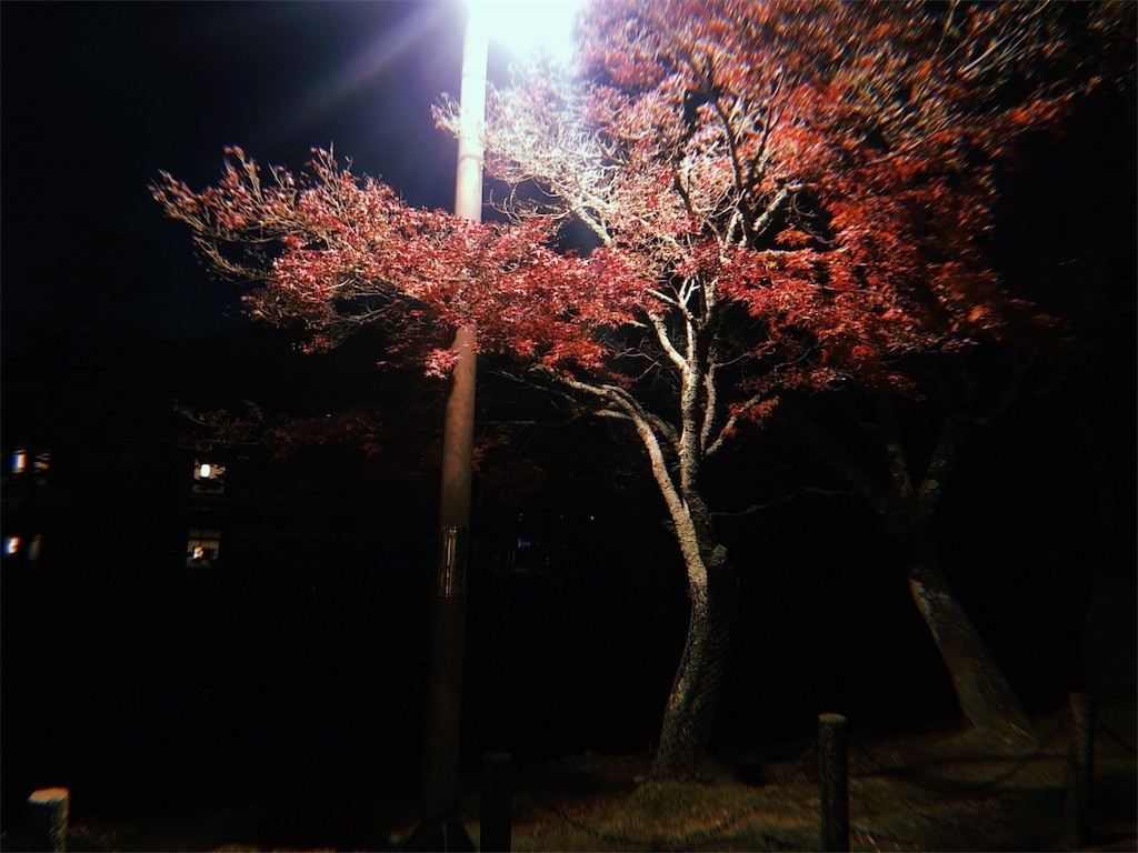 f:id:milou-blog:20191202231241j:image