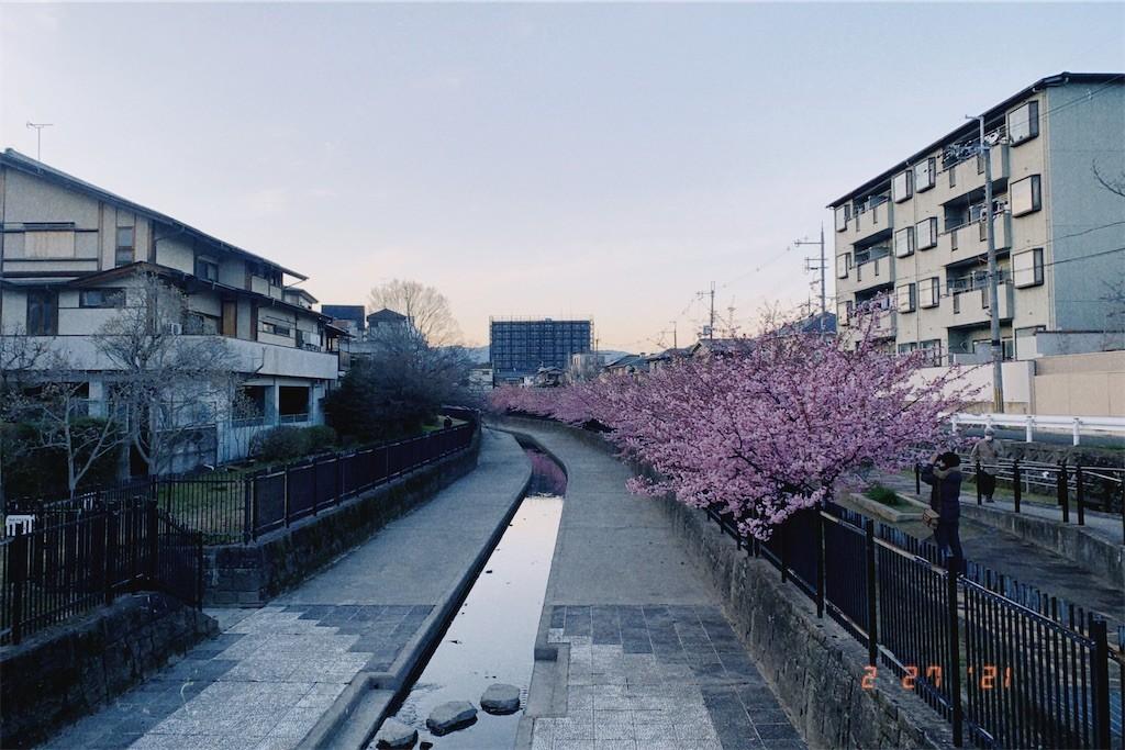 f:id:milou-blog:20210302013004j:image