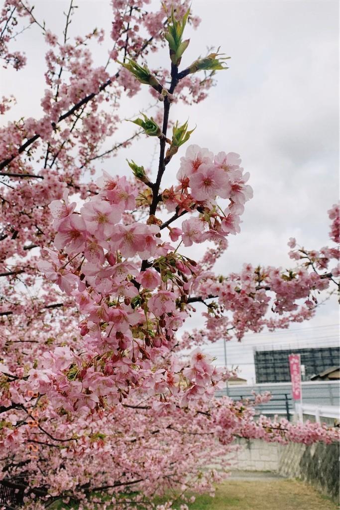 f:id:milou-blog:20210302013044j:image