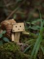 [ダンボー]森林探検
