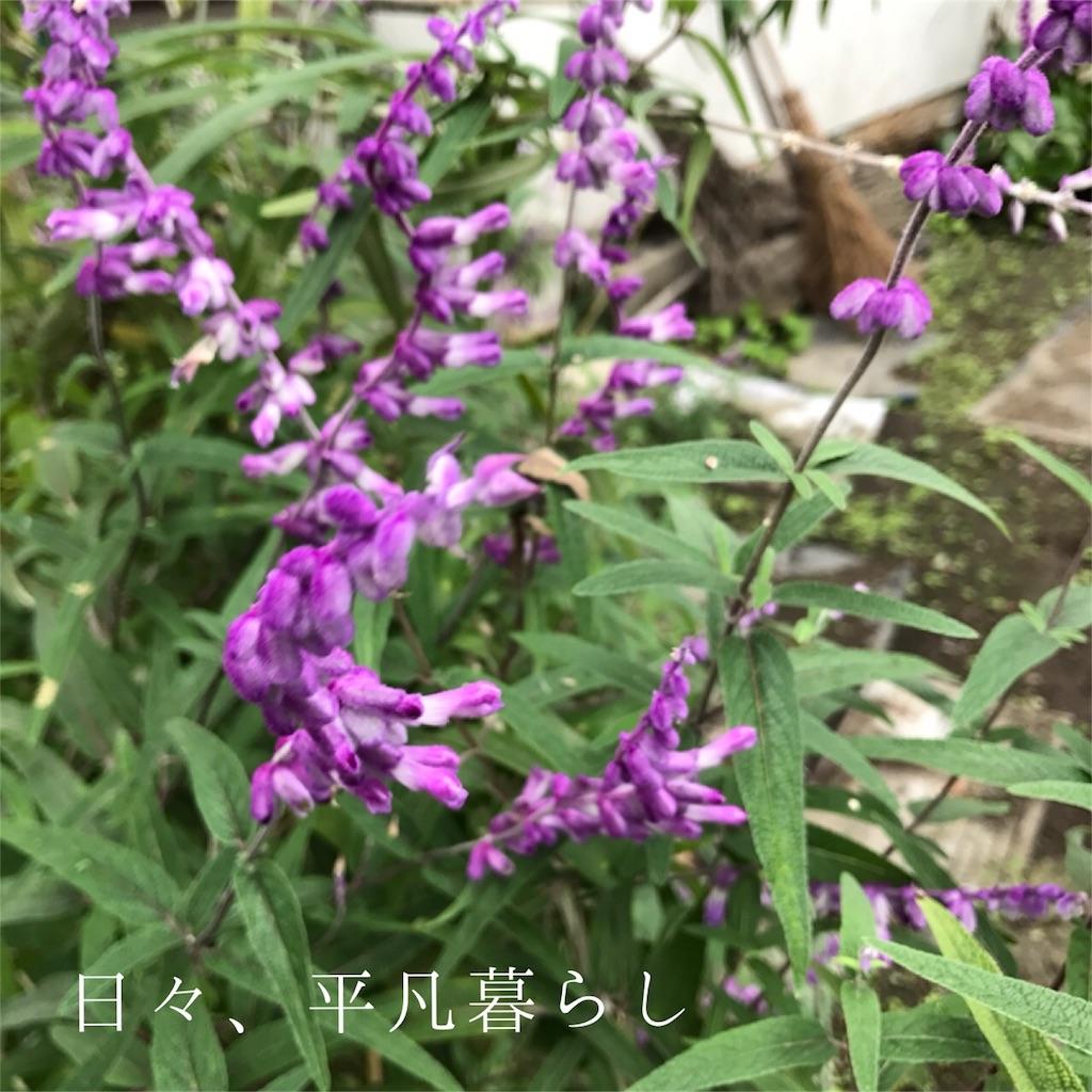 f:id:mimimiwo330:20161029225114j:image