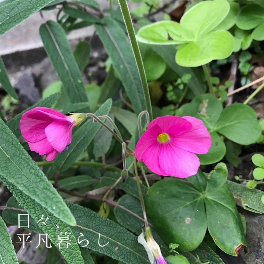 f:id:mimimiwo330:20161111020542j:image