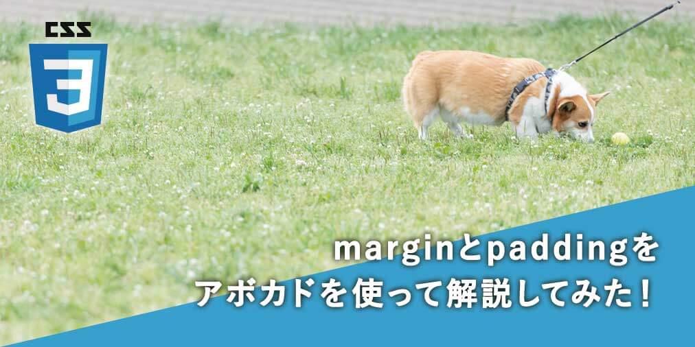 【CSS初心者入門】marginとpaddingをアボカドを使って解説してみた!