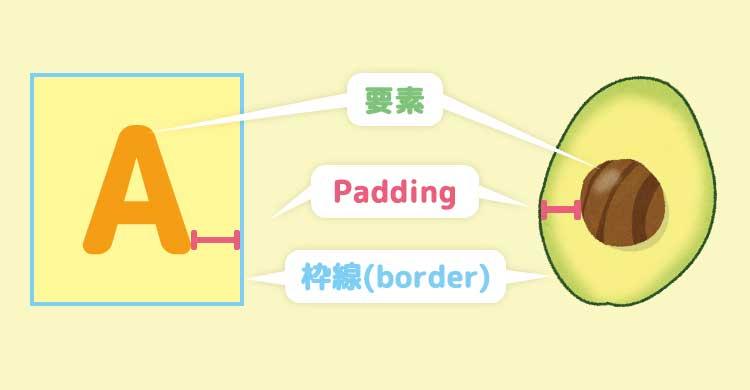 paddingをアボカドに例えてみた図