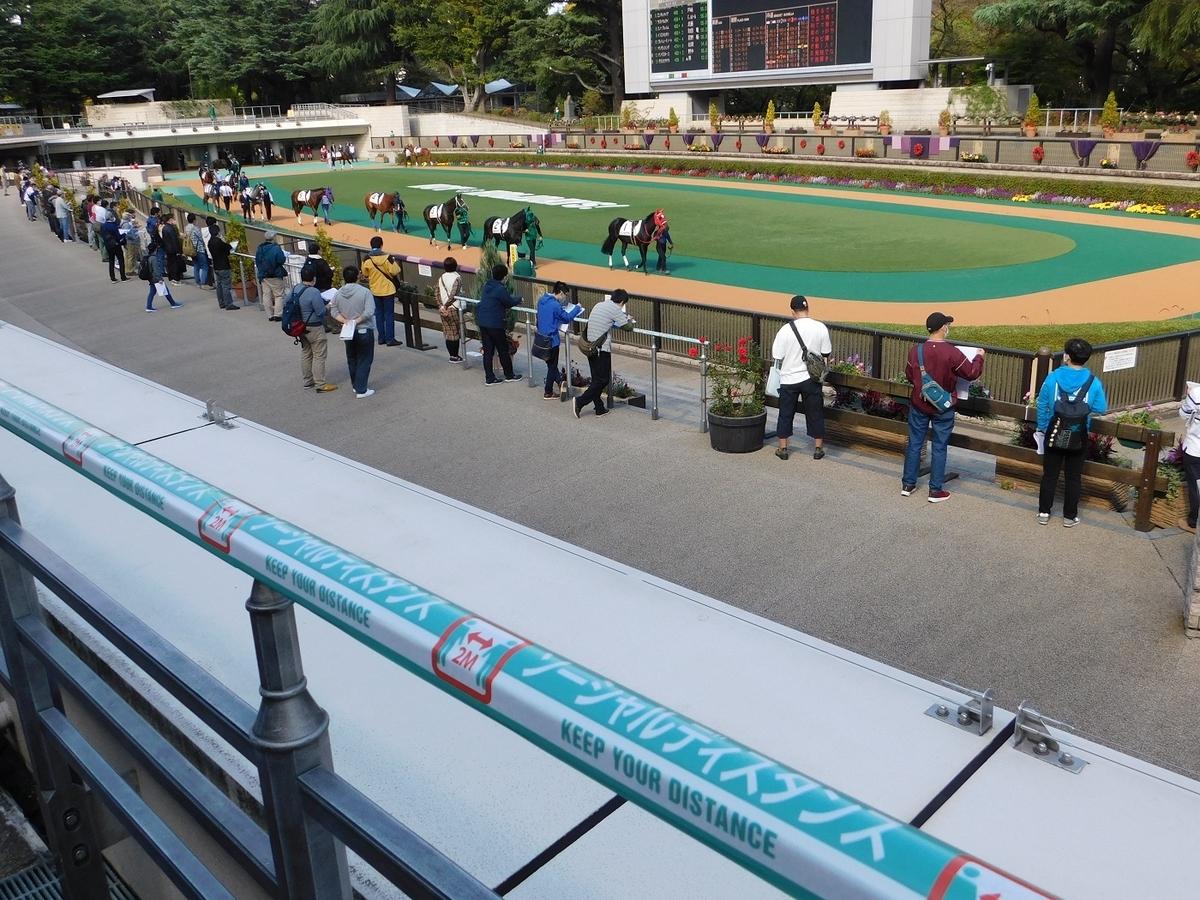 競馬,東京競馬場,東京競馬,パドック,観客,入場再開,keiba,コロナ,ソーシャルディスタンス