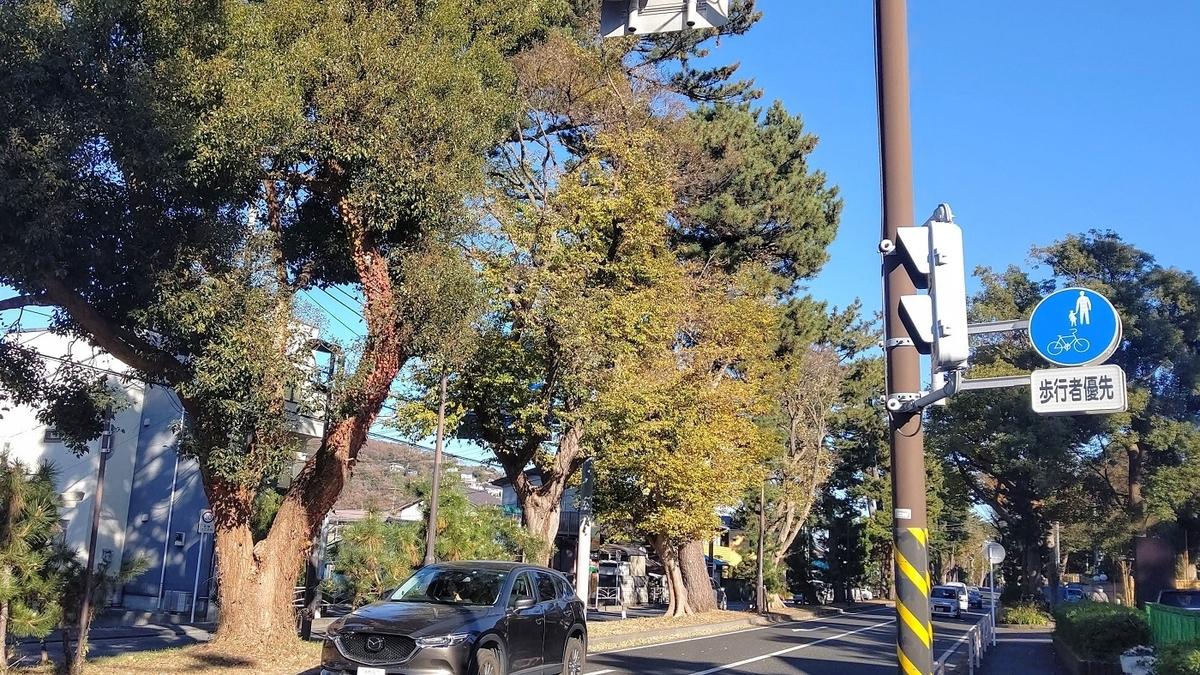 箱根駅伝 往路 4区 東海道 松並木