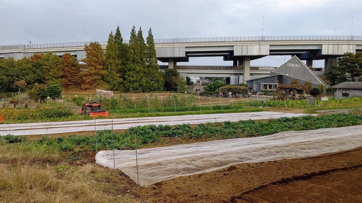 荒川 新芝川 足立区立都市農業公園 無農薬無化学肥料
