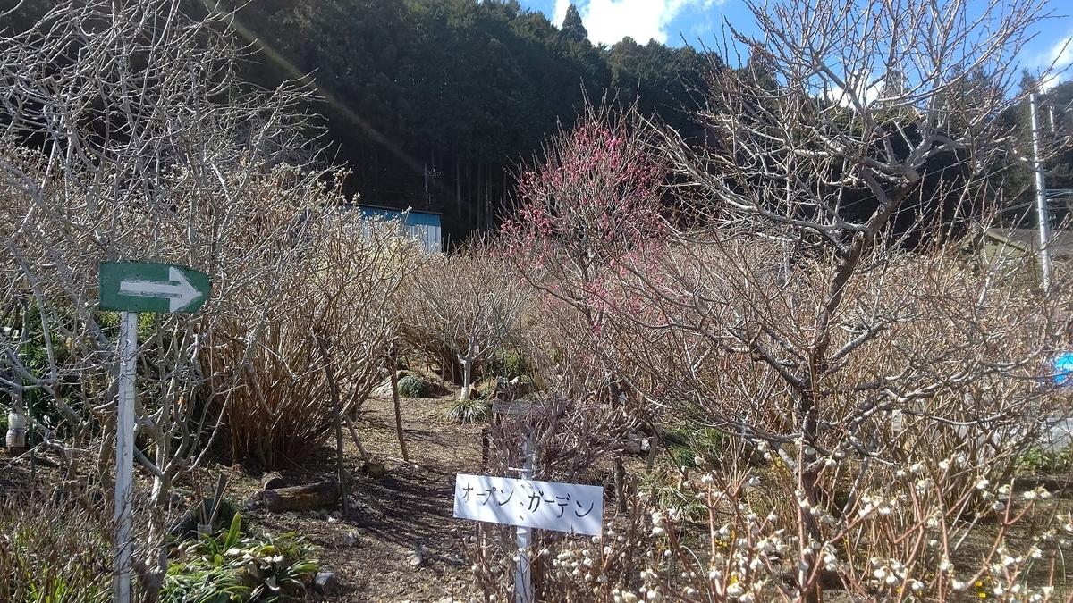 岩割の梅 オープンガーデン