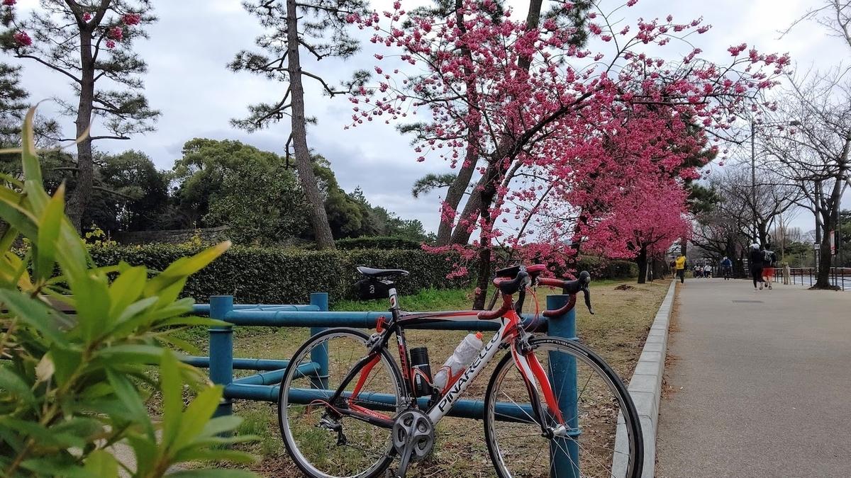 サイクリング 梅 観梅 東京23区