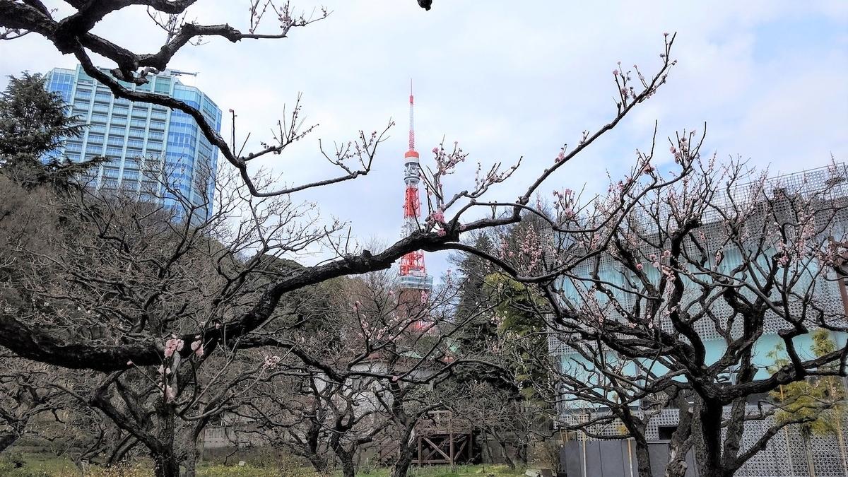 芝公園 梅林 東京タワー