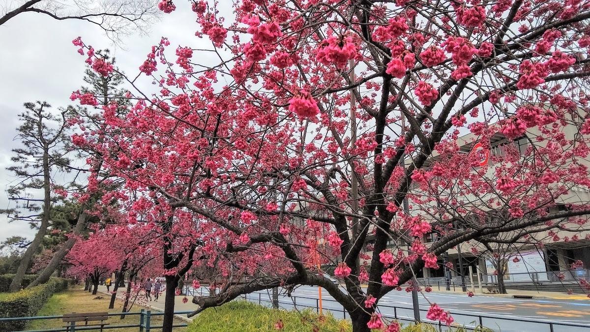 竹橋 東京国立近代美術館 紅梅 皇居ランナー