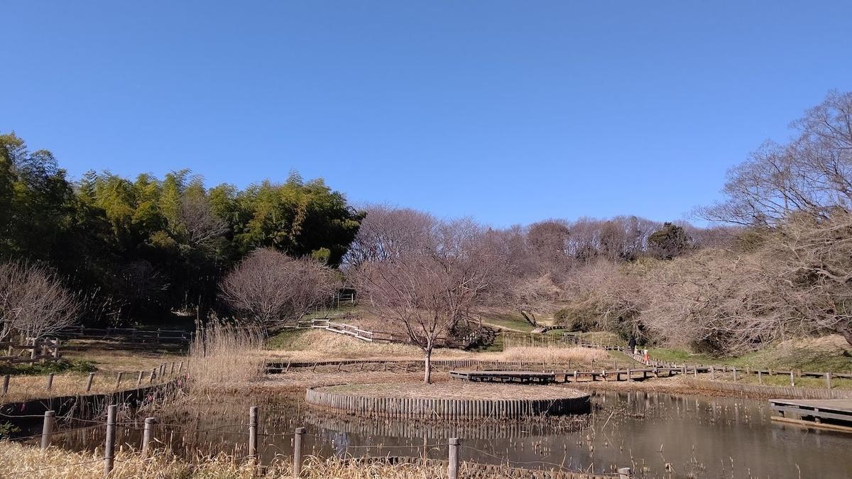 トンボ池 梅