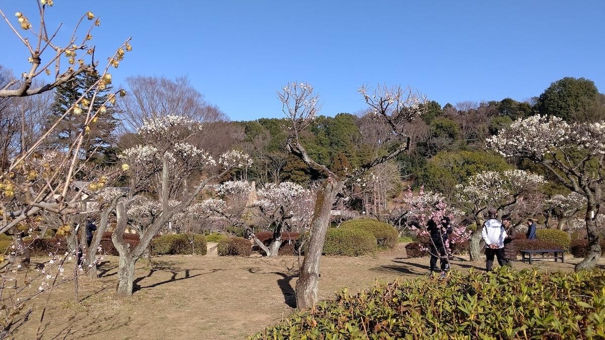 薬師池公園 町田リス園