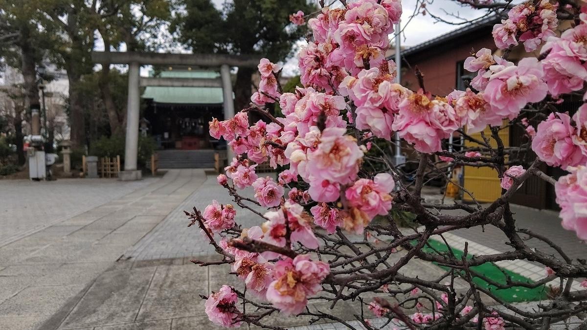 小村井香取神社 境内 梅 本殿
