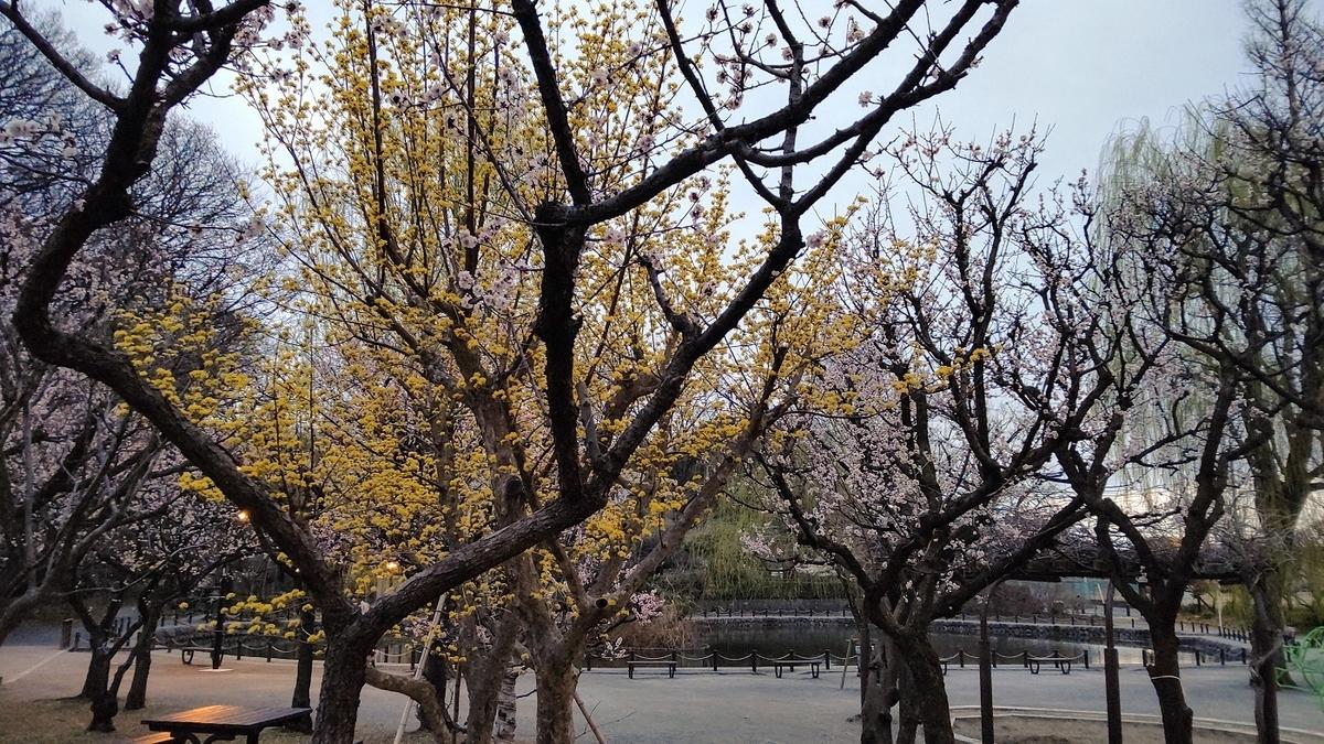 赤塚溜池公園 池 梅 花