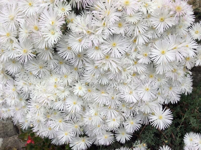 f:id:mimozaai:20140523210252j:image:w640