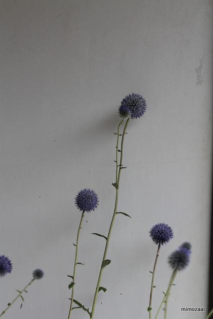 f:id:mimozaai:20140829224252j:image