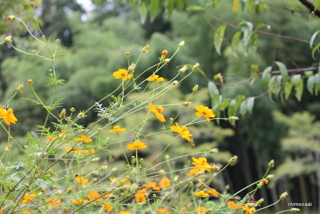 f:id:mimozaai:20140829224257j:image