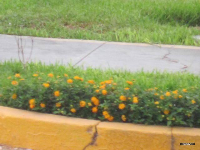 f:id:mimozaai:20150324042546j:image