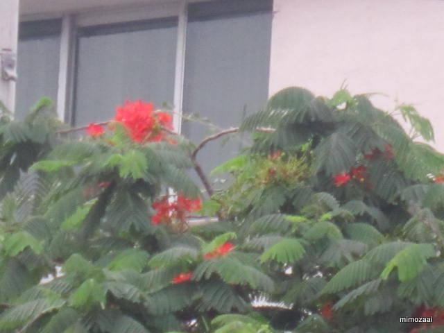 f:id:mimozaai:20150324042547j:image