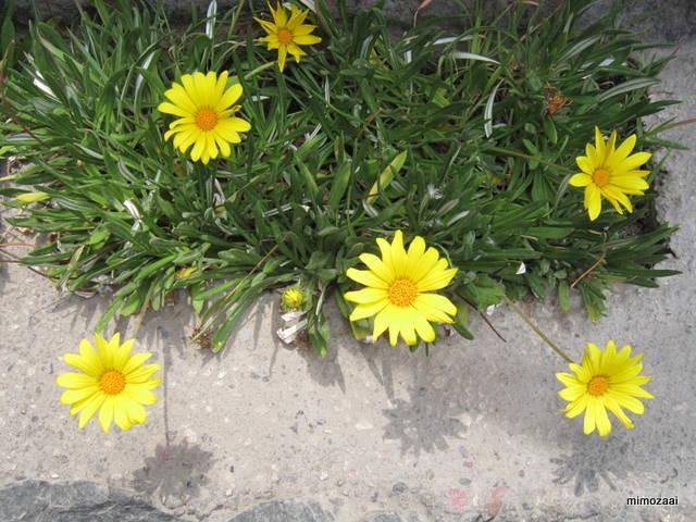 f:id:mimozaai:20150328020118j:image