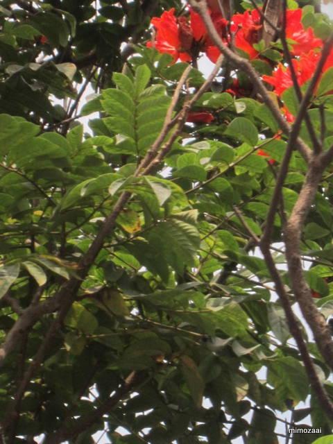 f:id:mimozaai:20150328020448j:image