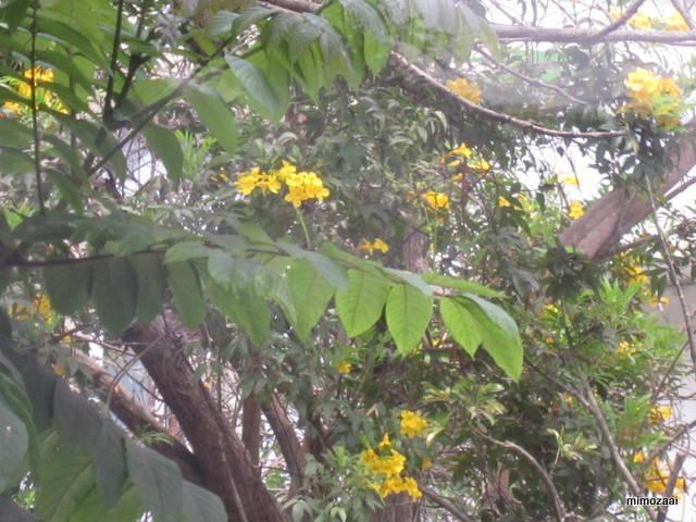 f:id:mimozaai:20150328020449j:image