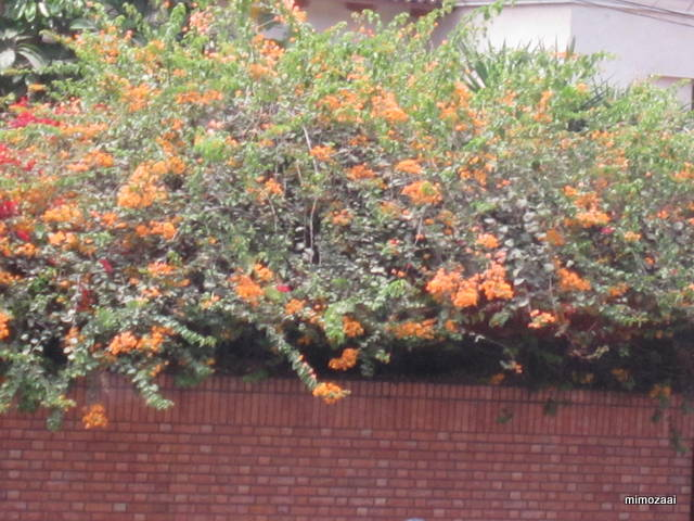 f:id:mimozaai:20150328020450j:image