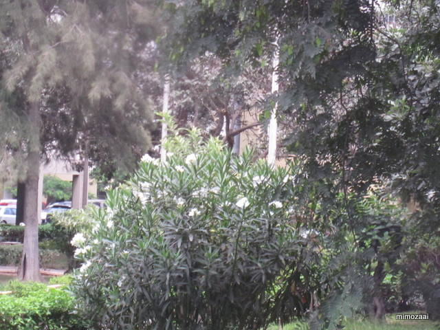 f:id:mimozaai:20150328020452j:image