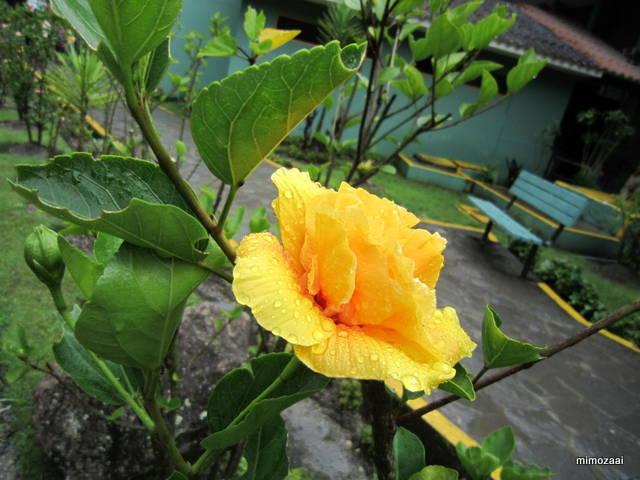 f:id:mimozaai:20150402234230j:image