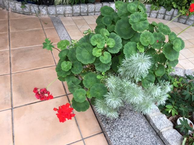 f:id:mimozaai:20160622215933j:plain