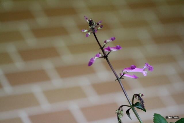 f:id:mimozaai:20160708203150j:plain