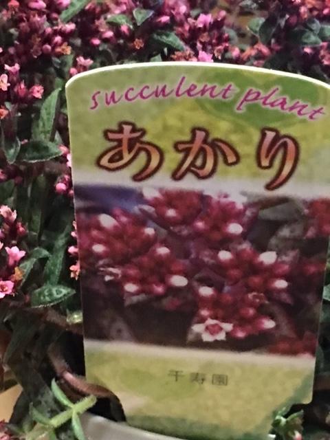 f:id:mimozaai:20160723203249j:plain