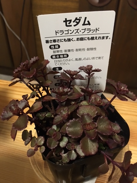 f:id:mimozaai:20160723203301j:plain