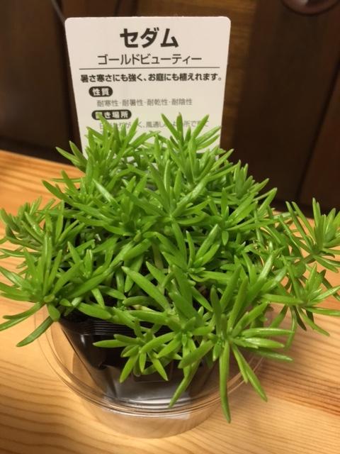 f:id:mimozaai:20160723203312j:plain