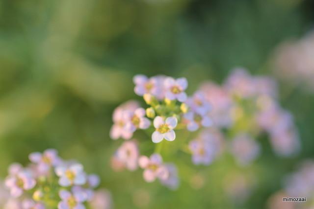 f:id:mimozaai:20160805195135j:plain